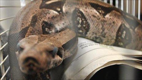 'Kojak' the snake