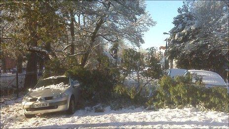 Part of a tree crashed on to parked cars in Penylan, Cardiff, after the snow
