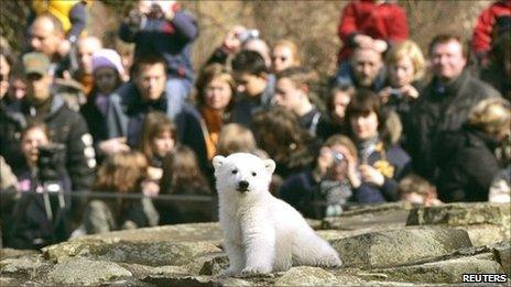 Knut at Berlin zoo surrounded by a crowd