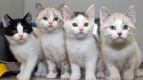 Kittens Catherine, Charles, Cambridge and Champagne were found abandoned during the Royal Wedding bank holiday