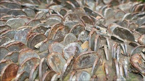 Coins in a tree trunk at Portmeirion