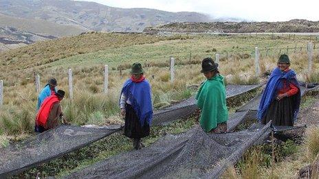 Women tending the crops