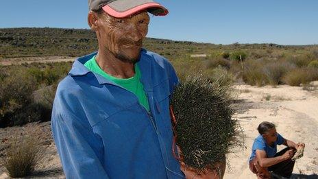 Jan Fryer and Drieka Kortze are small scale rooibos farmers