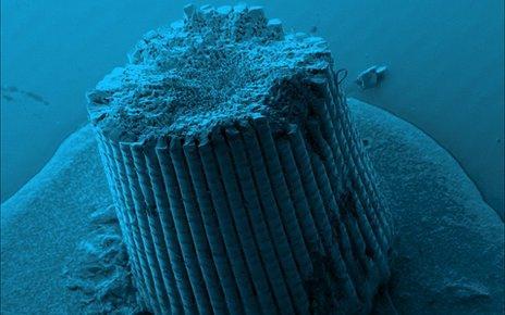 Colourised SEM image of sea urchin spine (Marina Krumova, U Konstanz)