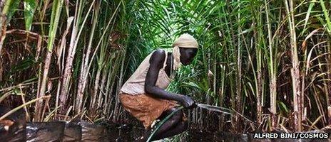 Ethiopia, Gambella. Abago (28) from the village of Ibago waters the oil palm nursery in the Karuturi compound.