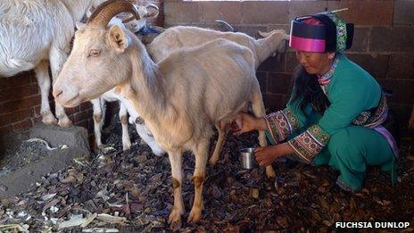 Luo Wenzhi milking a goat