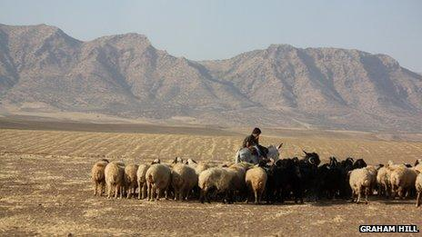 Shepherd boy tending his flock in the Kurdish region of north-east Syria