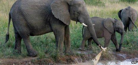 Elephants at a water hole in KwaZulu Natal, South Africa (Archive shot - May 2006)