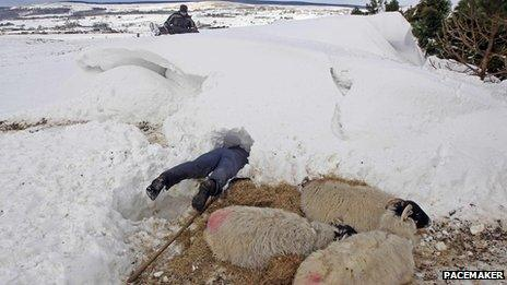 Man looks for sheep