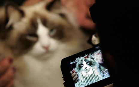 Cat having its photo taken