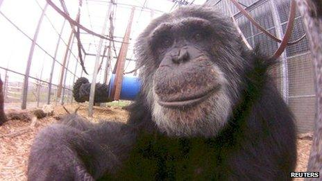 Chimp seen through the Lofi Fish-Eye camera