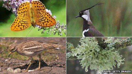 Clockwise: Silver-washed Fritillary butterfly, lapwing, lichen on a tree and a stone curlew