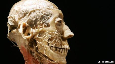 dissected head