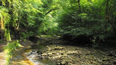 Woodland at Gelt Woods, Brampton, Cumbria