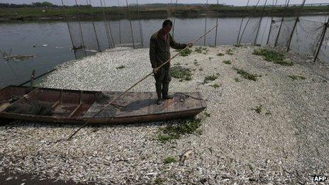 This picture taken on 3 September 2013 shows a fisherman looking at the dead fish floating on the Fuhe river in Wuhan, in central China's Hubei province after large amounts of dead fish began to be surface early the day before