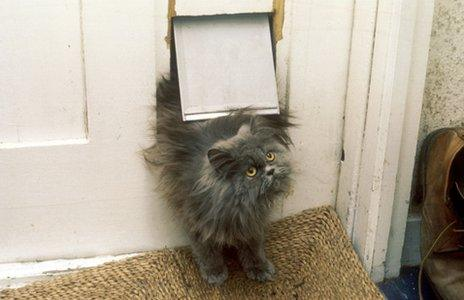 Cat coming into house through cat-flap