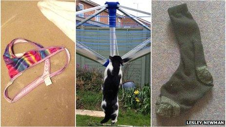 Cat climbing washing line