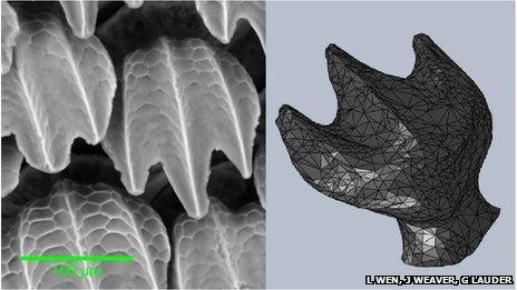 Scanning electron micrograph of real shark denticles (left) and the 3D model used to print a replica