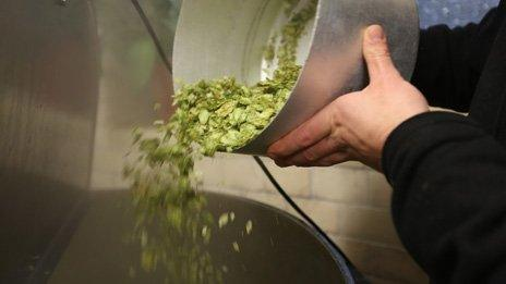 Hops being added to a beer being brewed