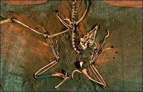 Archaeopteryx (Wogelius)