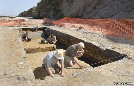 Excavation site (Image: Phil Crabb/ Natural History Museum)