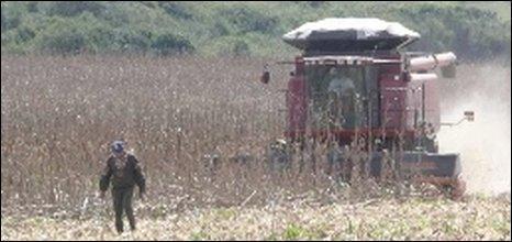 Brazilian farm