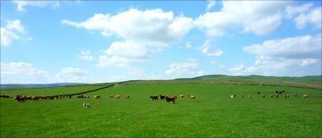 Cows at Lee Gate Farm