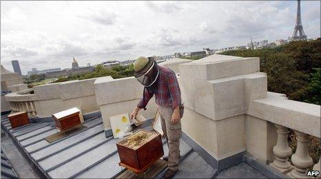Hives on the roof of the Grand Palais