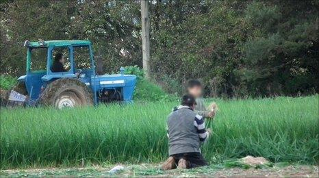 Romanian child working in a field in Worcestershire
