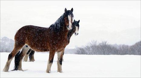 Horses in the snow at Penisa'rwaun