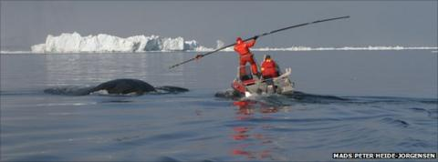 Whales take Northwest Passage as Arctic sea-ice melts ...