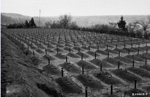 View of the cemetery at the Hadamar Institute, where victims of the Nazi euthanasia program were buried in mass graves