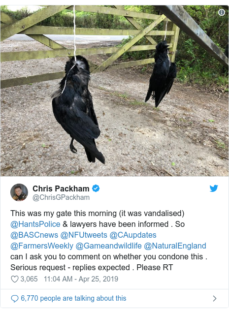 Chris Packham condemns dead crows hung from gate - BBC News