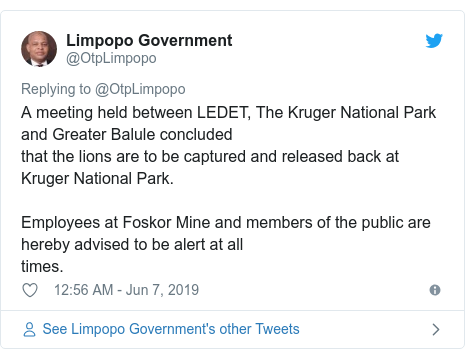 Twitter post by @OtpLimpopo: A meeting held between LEDET, The Kruger National Park and Greater Balule concluded that the lions are to be captured and released back at Kruger National Park.Employees at Foskor Mine and members of the public are hereby advised to be alert at all times.