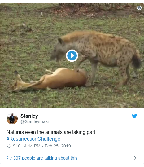 Twitter post by @Stanleymasi: Natures even the animals are taking part #ResurrectionChallenge