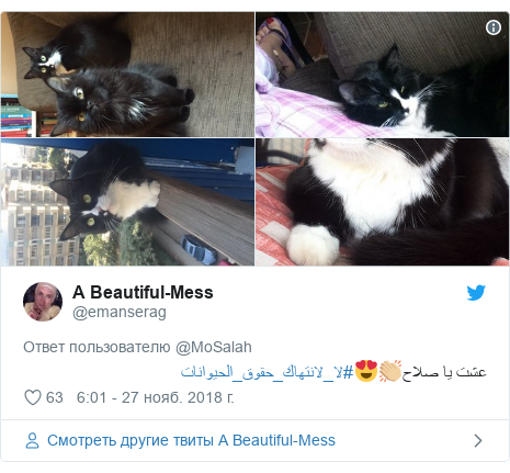 Twitter пост, автор: @emanserag: عشت يا صلاح👏🏼😍#لا_لانتهاك_حقوق_الحيوانات