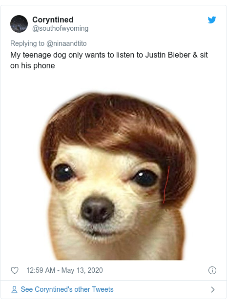 Twitter post by @southofwyoming: My teenage dog only wants to listen to Justin Bieber & sit on his phone