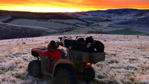 A sunset with three dogs on a quad bike