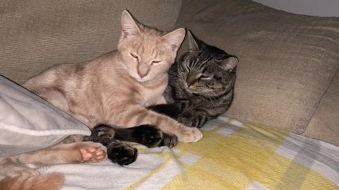 Alfreton poisoned cats