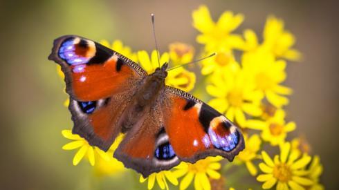 butterfly-on-flower.