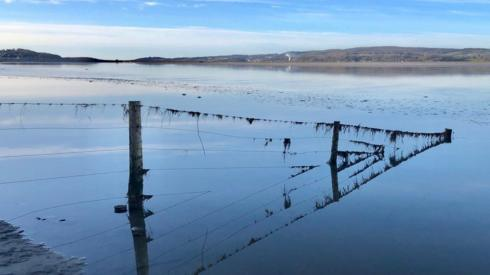 Posts reflected in icy water
