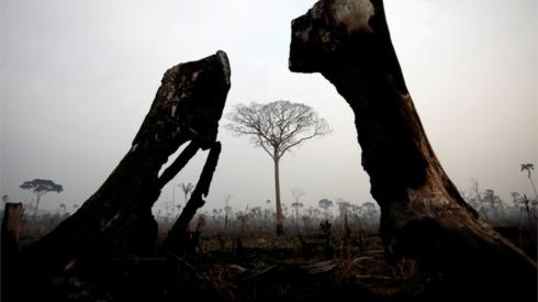 A tract of Amazon jungle is seen after a fire in Boca do Acre, Amazonas state, Brazil August 24, 2019.