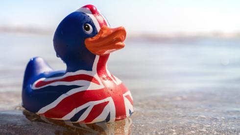 Union flag duck