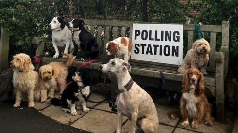 A number of dogs sit around a bench outside a polling station in Dulwich Village in London