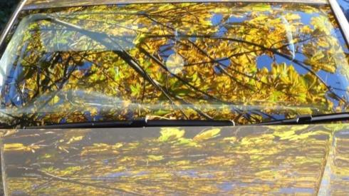 Leaves reflected in car