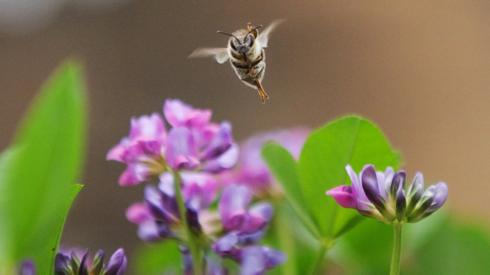 Bee, Ethiopia