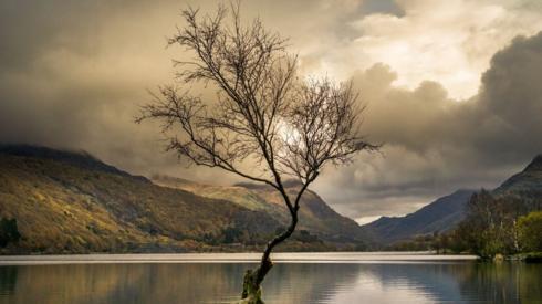 The 'lonely tree' in Llanberis, Snowdonia