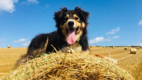 Dog on hay