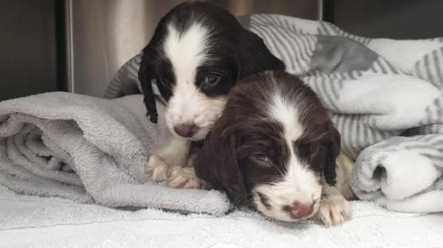 Two surviving puppies