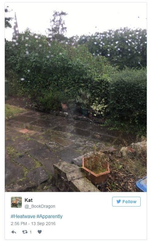 @_BookDragon on Twitter: Heatwave, apparently. Photo: A sodden garden.